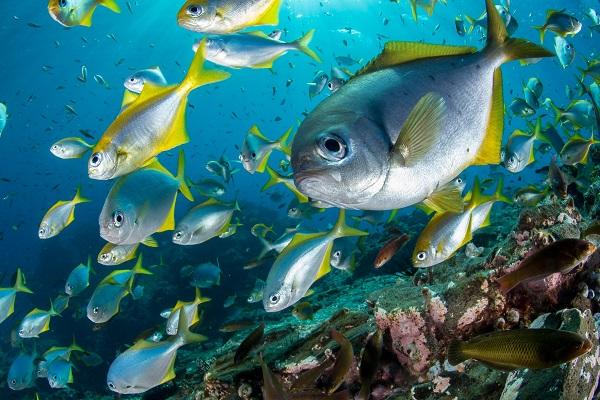 En el Día Mundial de los Océanos National Geographic dedica su programación para crear conciencia sobre la importancia de su protección
