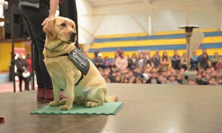 Nestlé Purina lanza Fondo Concursable en beneficio de las mascotas