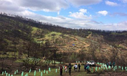 Corporación Cultiva llama a plantar árboles nativos como una acción para combatir el cambio climático
