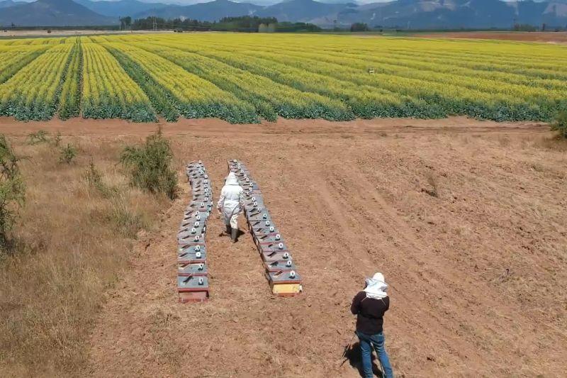 The earth says: optimizan la polinización de abejas mediante IA y módulos inteligentes para aumentar el rendimiento