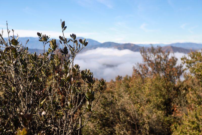 Cerro Santa Inés es declarado Santuario de la Naturaleza